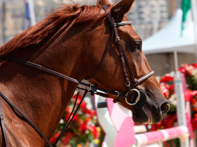 Cheval au Jumping de Monaco